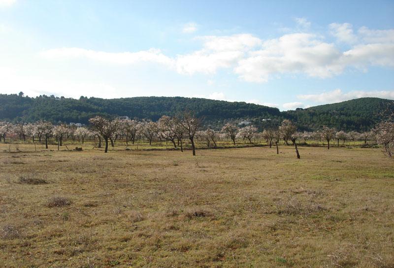 Grote grond in St. Agnes St. Agnes te koop