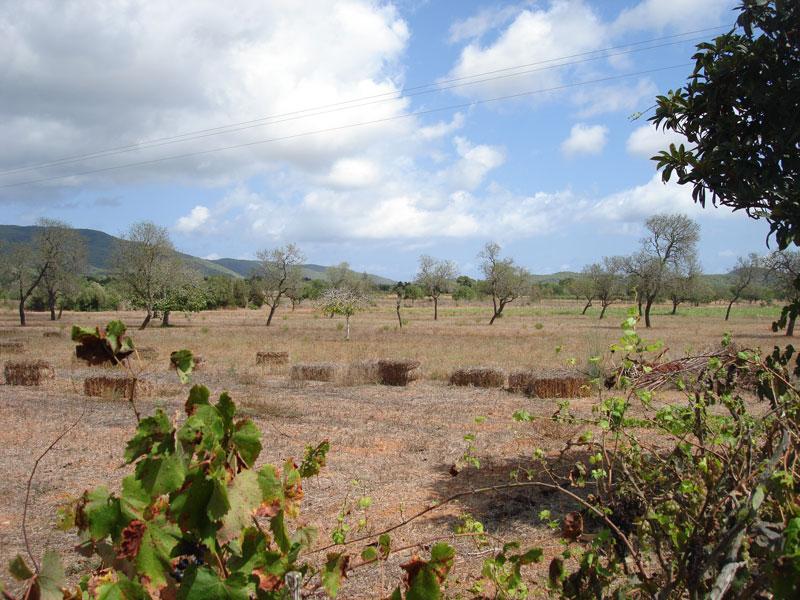 Vlakke land te koop in San Carlos