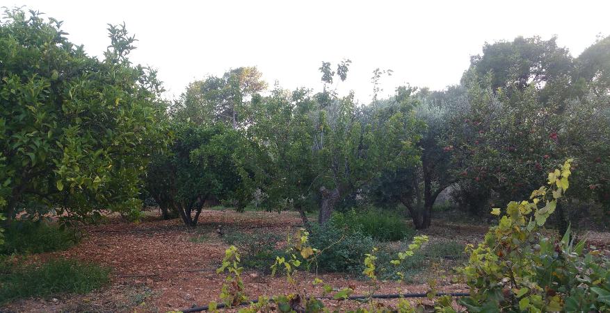 Gezellig huis met zwembad en grote tuin dicht bij San Rafael